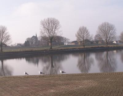 Gulls on the River Maas