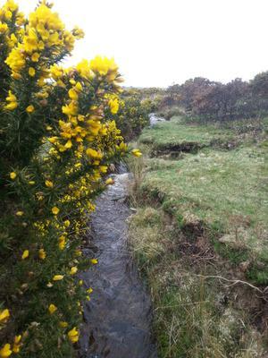 Up to the Windy Cross, Dartmoor, UK